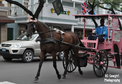Horse Carriage in Nassau