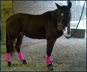 Pink Prof Choice Boots on my Bay Horse