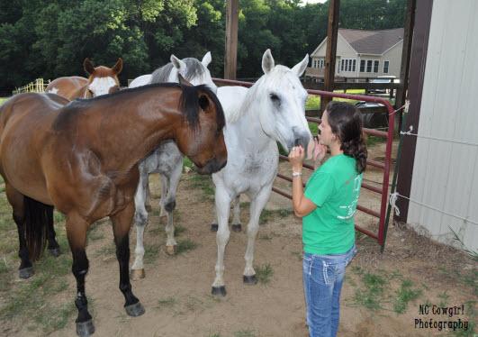 jealous horse