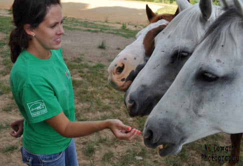 feeding horses treats