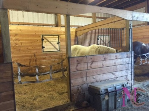 Horse Barns Do It Yourself : Diy horse stalls do it your self