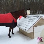 horses eating snow