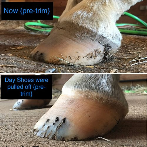 barefoot horse hoof